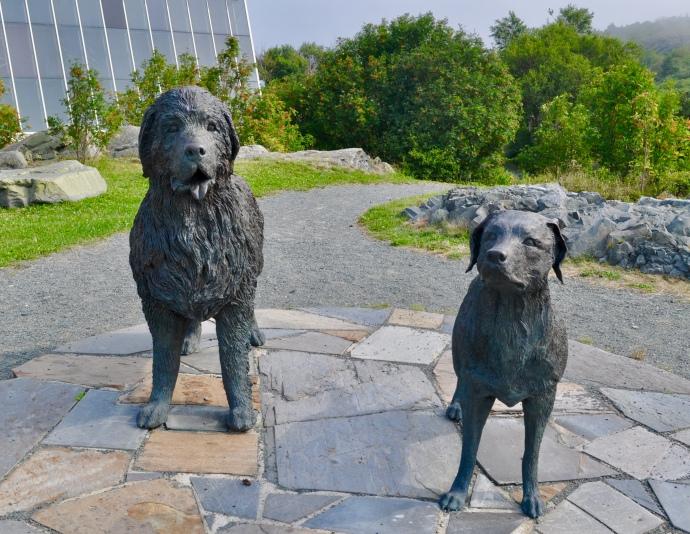 Newfoundland & Labrador dogs