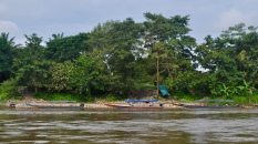Long boats along the river bank