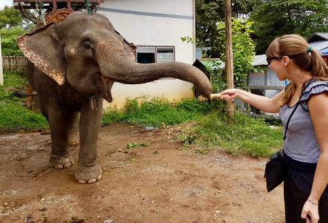 Feeding an elephant