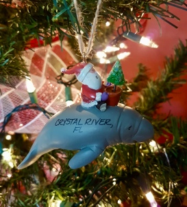 Swam with the manatees and then got this ornament in Crystal River, Florida